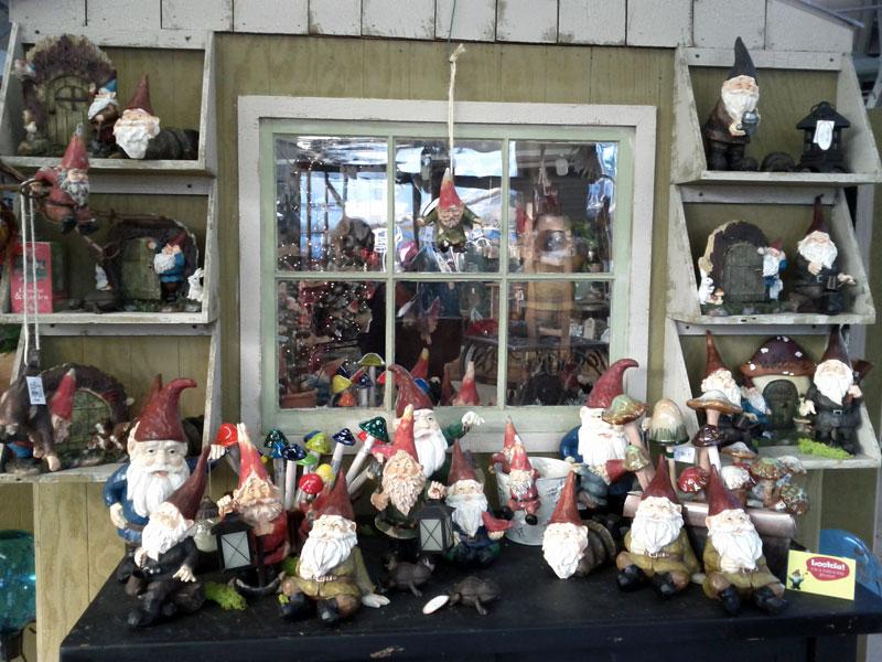 Molbak's gnome display