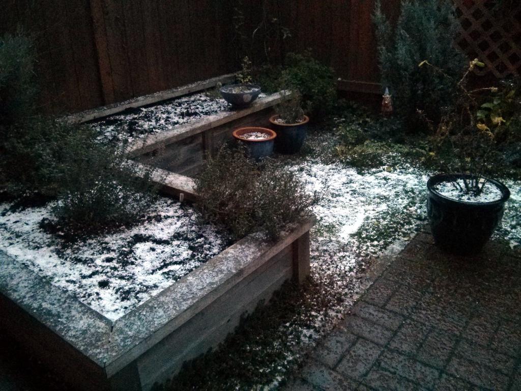 Backyard Hail
