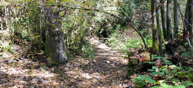 Cherry Creek Falls Trail