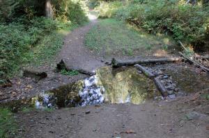 Cherry Creek Falls creek