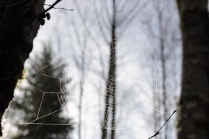 Cougar Mountain - Spiderweb