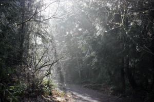 Cougar Mountain - Spiderwebs