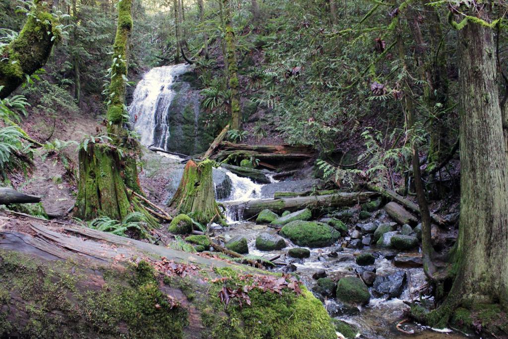 Cougar Mountain - Coal Creek Falls